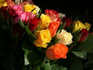 kolorowe roze