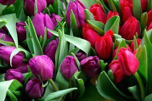 Jakie kwiaty kupić na dzień pozytywnego myślenia?